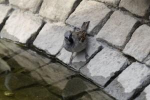 Ptice gube staništa u Srbiji