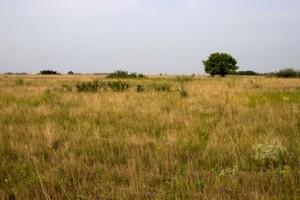 Za pedeset godina površina pod pašnjacima prepolovljena