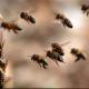 Ozbiljan biznis: Istresu pčele pa bace košnice