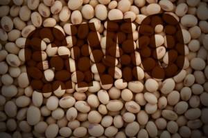 EU odobrila upotrebu GM soje u hrani za ljude i životinje