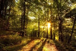 Trivan: Cilj je da 41 procenat Srbije bude pod šumama