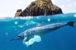 Do 2050. u okeanima više plastike nego ribe