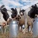 Ističe rok prelevmanima na mleko – ko se raduje, ko strahuje?