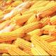 Cena kukuruza dostigla ovosezonski maksimum