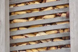 Ratari: Skladištari nas ucenjuju prodajom kukuruza