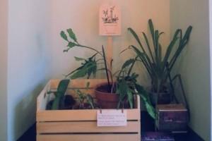 Azil za odbačene biljke u Ljubljani