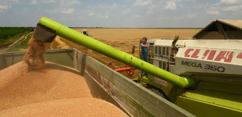 Interventni otkup merkantilne pšenice od 10. jula