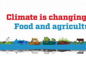 World food day: Climate is changing. Food and agriculture must too
