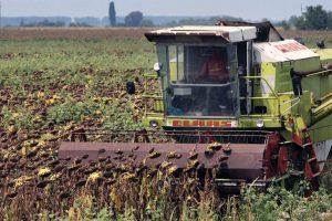 Trgovci iz BiH nude višu cenu za suncokret