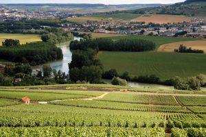 Francuska: Vinogradi opustošeni, pada proizvodnja vina