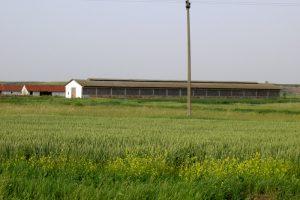 Efekti arapskog ulaganja u poljoprivredu – koliko košta državna zemlja?