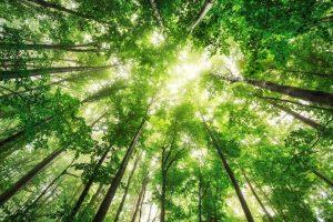 Na Zemlji raste 60.000 vrsta drveća