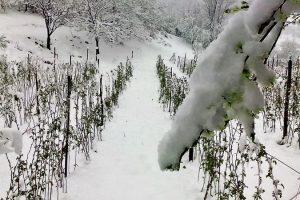 Mraz oštetio maline, potrebna stručna pomoć države