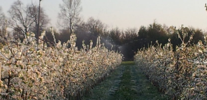 Novi mraz dodatno oštetio voće