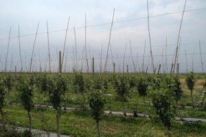 Zaštita stabala mladih voćaka od divljači