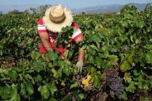 Bolji uslovi za rad u poljoprivredi