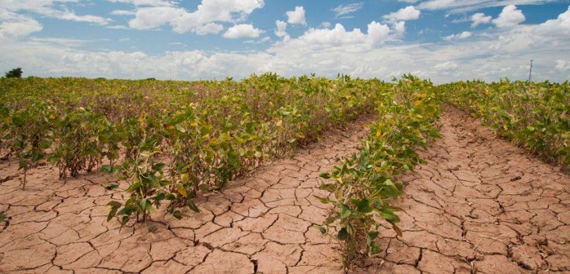 Šteta od suše, za sada, 600 miliona evra