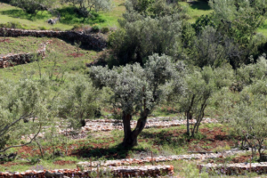 Dalmatinci povukli rekordne iznose iz EU fondova