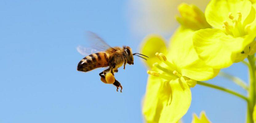 Počinje kontrola korišćenja insekticida štetnih za pčele