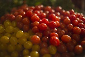 Izraelska kompanija uzgojila najsitniji čeri paradajz