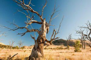 UN: Tri poslednje godine najtoplije do sada