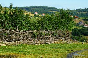 Dodatna pomoć poljoprivrednicima na Kosovu
