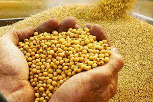 Brošure za proizvođače kukuruza i soje