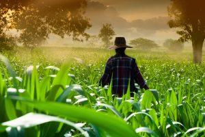 Svet: Sve niže cene hrane, poskupele samo žitarice