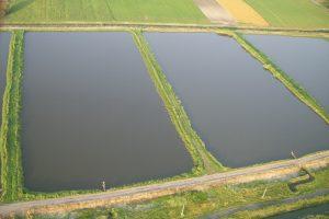 Podsticaji za pretvaranje neobradivog zemljišta u ribnjake
