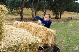 Zloupotreba dečjeg rada u poljoprivredi prihvata se kao deo tradicije