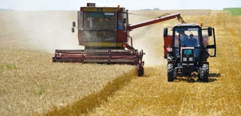 Ovogodišnji prinos pšenice iznad proseka
