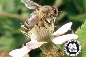 Pčelari da prijave sumnju na trovanje neoniktinoidima