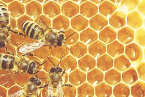 Vojvodina: Raspisan drugi konkurs za podršku pčelarima