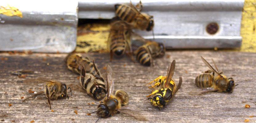 Francuska uvodi zabranu pet pesticida koji škode pčelama