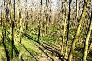 Energetska poljoprivreda – solidna razvojna perspektiva Srbije