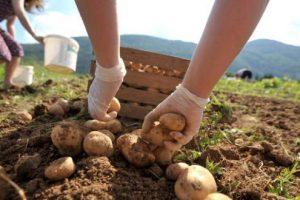 Poljoprivreda na drugom mestu po sivoj ekonomiji