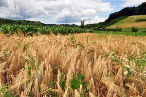 Hrvatska: Ulaganja u poljoprivredu opravdana