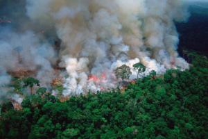 Širenju požara u Amazoniji pomogla je poljoprivreda
