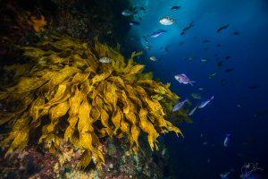Svetski okeani puni zlata