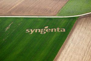 Syngenta će upravljati sa 10 miliona hektara u istočnoj Evropi