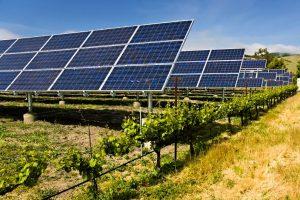 Moguća pozitivna korelacija između solarnih ploča i biljaka