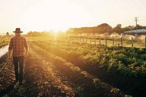 EBRD ulaže 15 miliona evra u poljoprivrednu infrastrukturu