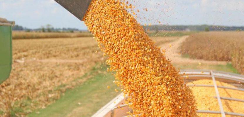 Potpisan memorandum o izvozu kukuruza u Kinu