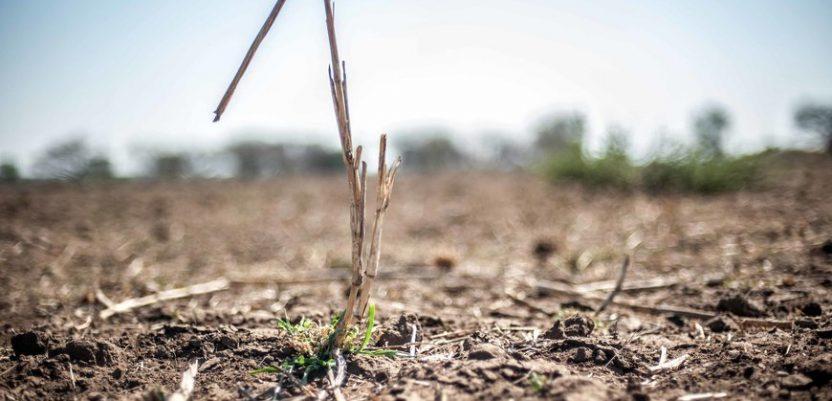Država nudi u zakup poljoprivredno zemljište lošeg kvaliteta