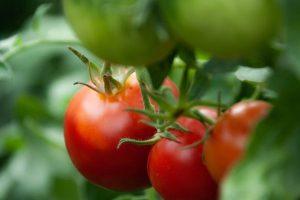 Povrtari sutra opet dele paradajz u centru Leskovca i traže naknadu štete