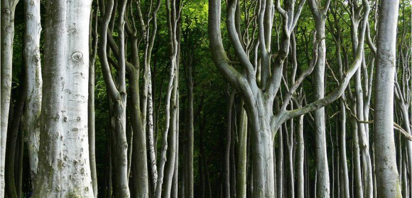 Zašto umiru nemačke šume