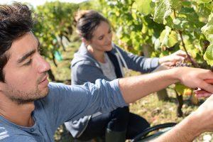Italija otvara granice za 150.000 sezonskih radnika