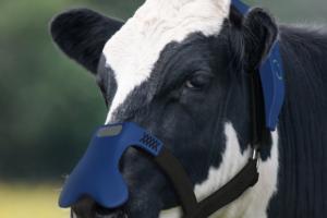 Maske za goveda u cilju smanjenja emisije metana