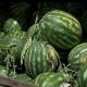 Na Veletržnici lubenica i dalje aktuelna, raste promet grožđa