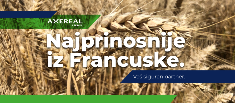 Sorte pšenice i ječma za rekorde